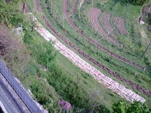 terrazzamenti coltivati