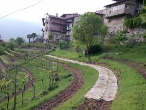 terrazze coltivate